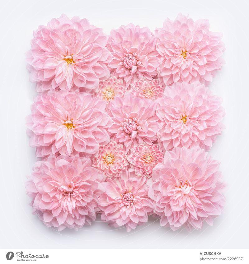 Pastellrosa Blumen Layout Design Veranstaltung Feste & Feiern Valentinstag Muttertag Hochzeit Geburtstag Natur Pflanze Rose Blüte Dekoration & Verzierung