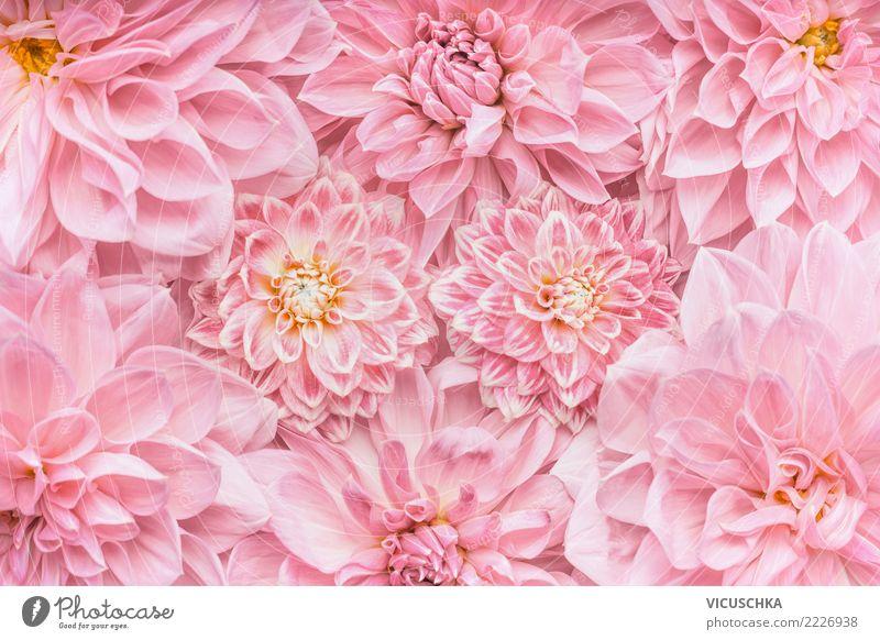 Pastell rosa Blumen Hintergrund Stil Design Feste & Feiern Valentinstag Muttertag Hochzeit Geburtstag Natur Pflanze Blatt Blüte Dekoration & Verzierung