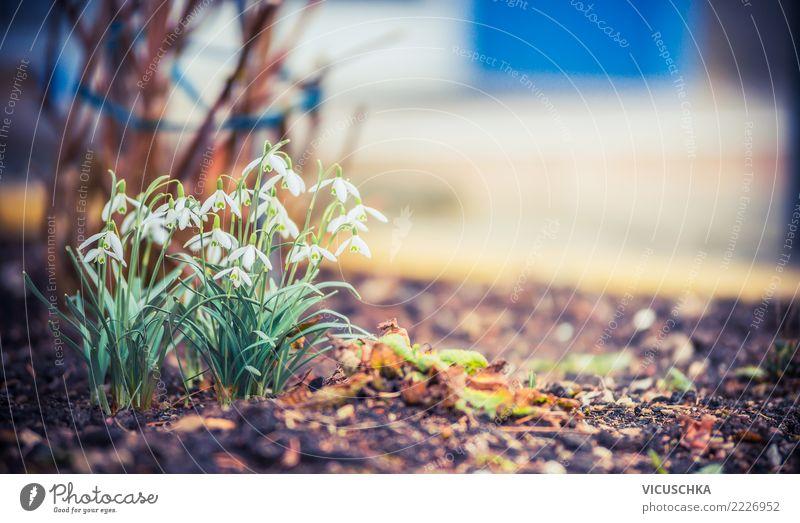 Frühling Natur erwacht mit Schneeglöckchen Lifestyle Winter Garten Pflanze Schönes Wetter Blume Blüte Park Frühlingsblume Frühlingsbeet Farbfoto Außenaufnahme