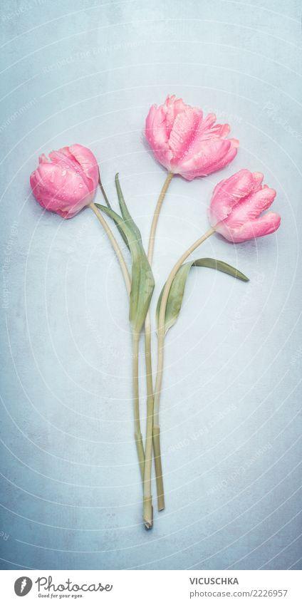 Tulpen Blumenstrauß Stil Design Feste & Feiern Valentinstag Muttertag Hochzeit Geburtstag Natur Pflanze Frühling Blatt Blüte Dekoration & Verzierung blau rosa