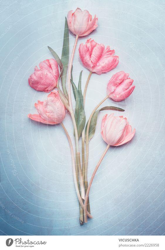 Tulpenbündel in der Pastellfarbe auf Blau Stil Design Feste & Feiern Valentinstag Muttertag Hochzeit Geburtstag Pflanze Frühling Blume Blüte