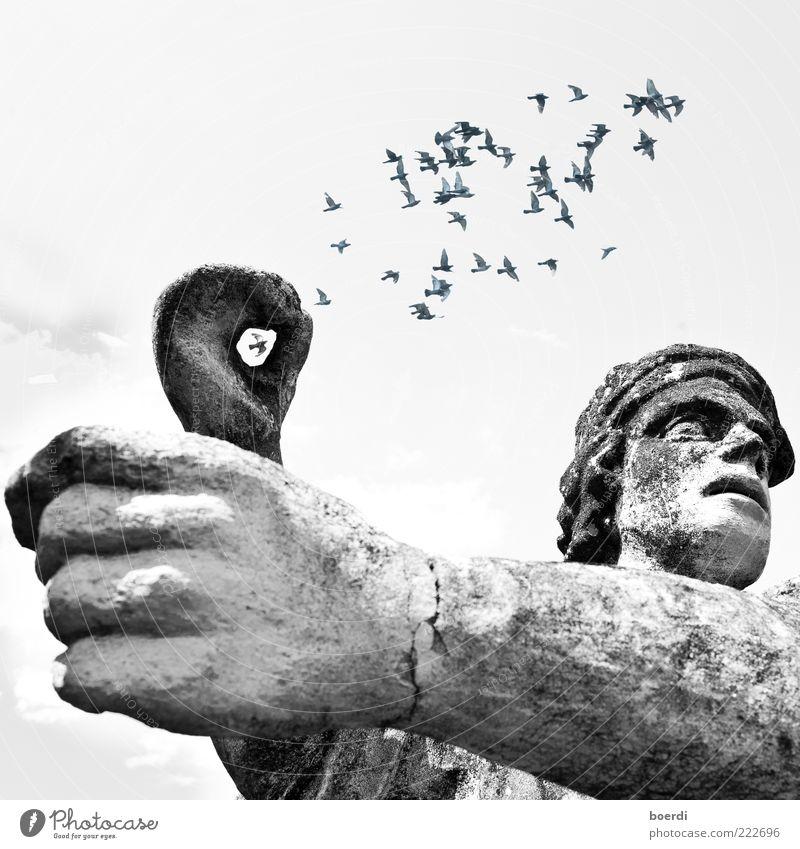 eIngefangen Tier Bauwerk Architektur Sehenswürdigkeit Denkmal Statue Vogel Taube Schwarm fliegen stehen alt Bekanntheit Stimmung Bewegung Freiheit stagnierend