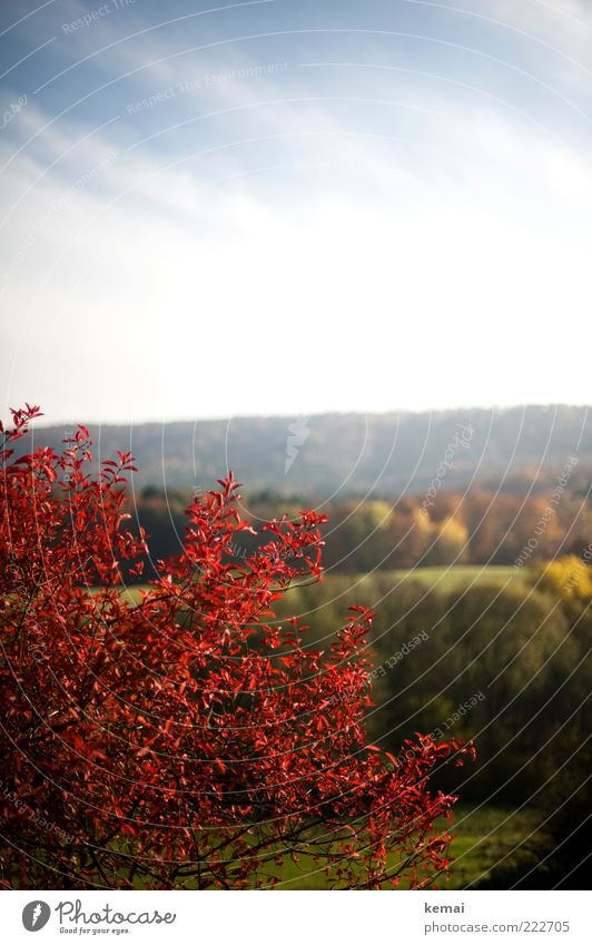 Rote Zora Himmel Natur grün Baum Pflanze rot Blatt Wolken Wald Herbst Umwelt Landschaft Wachstum Sträucher Hügel Schönes Wetter