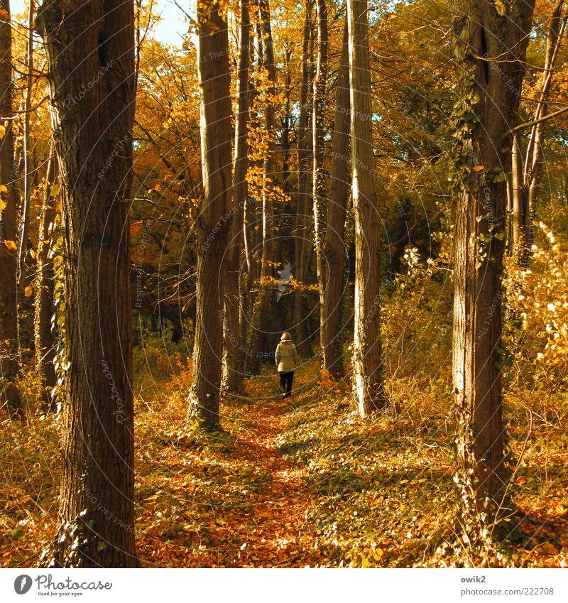 Holzweg Spaziergang Spazierweg Mensch Frau Erwachsene 1 Umwelt Natur Landschaft Pflanze Erde Herbst Klima Wetter Schönes Wetter Baum Sträucher Wald Wege & Pfade