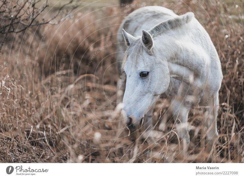 Pferdtastisch Natur weiß Einsamkeit Tier ruhig Umwelt Herbst Wege & Pfade natürlich braun Feld Sträucher Warmherzigkeit rein Fressen