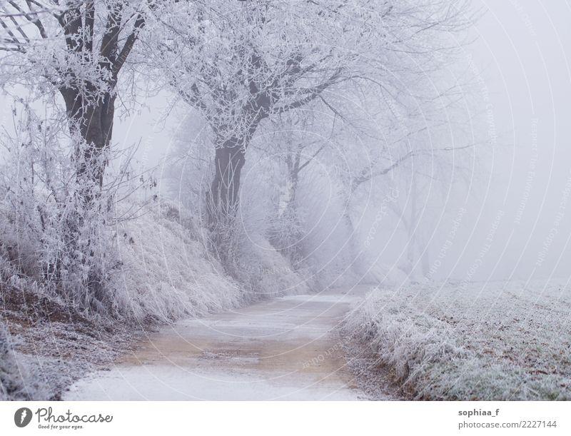gefrorener Weg mit Bäumen, neblige Winterlandschaft Wunderland idyllisch Park Schnee Feld Saison Wetter Nebel frostig kalt schön Weihnachten Wald Hintergrund