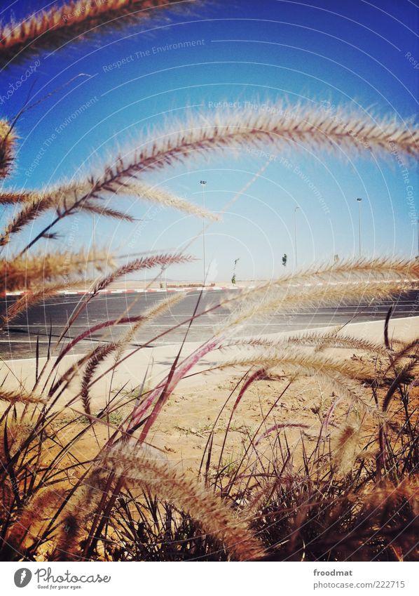 grasnarbe Ferien & Urlaub & Reisen Ausflug Umwelt Natur Menschenleer Straße Autobahn Wärme exotisch Wege & Pfade Marokko Rastplatz unterwegs Gräserblüte Asphalt