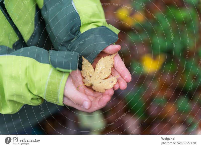 Trostblatt harmonisch Wohlgefühl Zufriedenheit Sinnesorgane Erholung Meditation Kindergarten lernen Landwirtschaft Forstwirtschaft Kleinkind Kindheit 1 Mensch