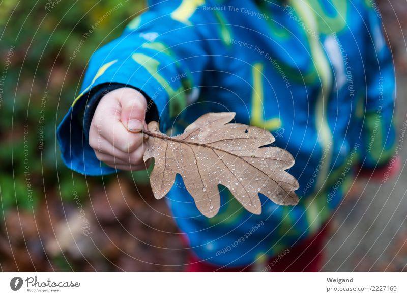 Perlenblatt Kindergarten Landwirtschaft Forstwirtschaft Kleinkind Mädchen Junge Kindheit 1 Mensch Blatt Wald Fröhlichkeit frisch trösten dankbar Glaube