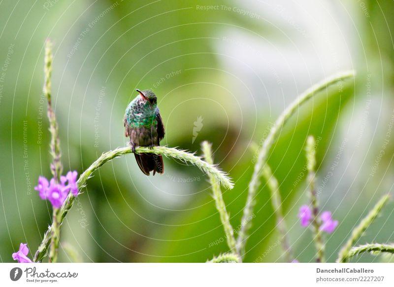 Schau her... Natur Sommer schön grün Blume Tier Blüte Wiese Gras klein Garten Freiheit Vogel rosa Park sitzen