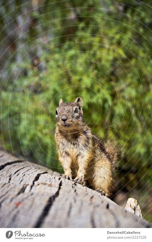 Haste mal 'ne Nuss? Natur Tier Wald klein Park frei Wildtier sitzen Schönes Wetter warten niedlich beobachten Freundlichkeit Neugier tierisch Umweltschutz