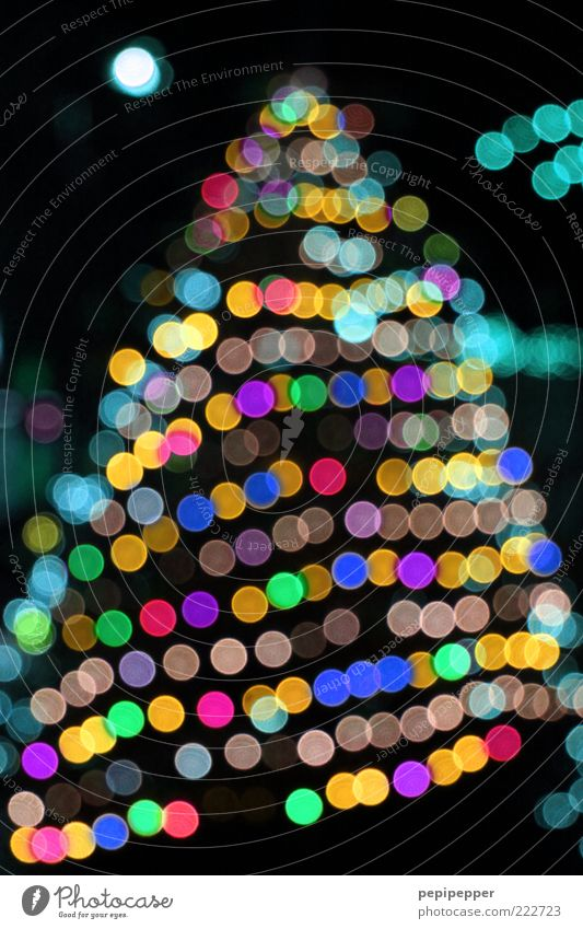 kitsch Winter Baum mehrfarbig Tanne Weihnachten & Advent Farbfoto Außenaufnahme Detailaufnahme Abend Nacht Licht Kontrast Reflexion & Spiegelung