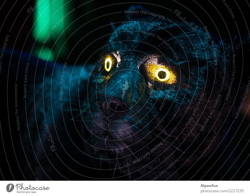 The dark side | is glowing Tier dunkel Auge Traurigkeit Tod Angst leuchten Wildtier Abenteuer gefährlich bedrohlich Todesangst Trauer Wut Fell gruselig