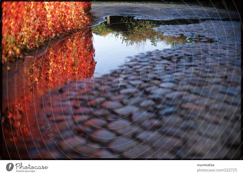 roter Wegesrand Umwelt Natur Pflanze Sträucher Hecke Verkehrswege Pflastersteine Stein Stimmung Farbe Jahreszeiten Herbst Wegrand Pfütze nass Farbfoto Morgen