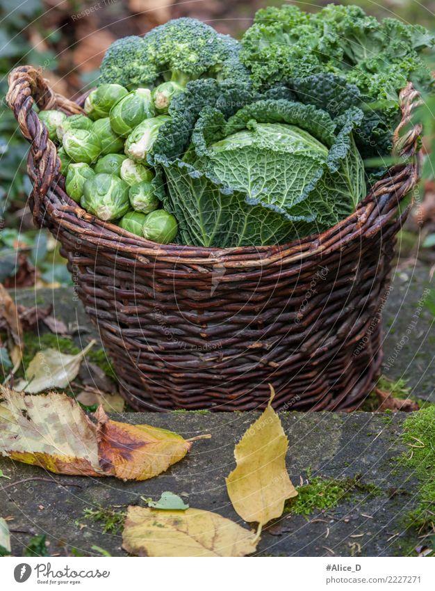 Herbstseason regional Gemüsekorb Lebensmittel Wirsing Rosenkohl Brokkoli Grünkohl Ernährung Bioprodukte Diät Gesundheit Winter Garten frisch lecker nachhaltig