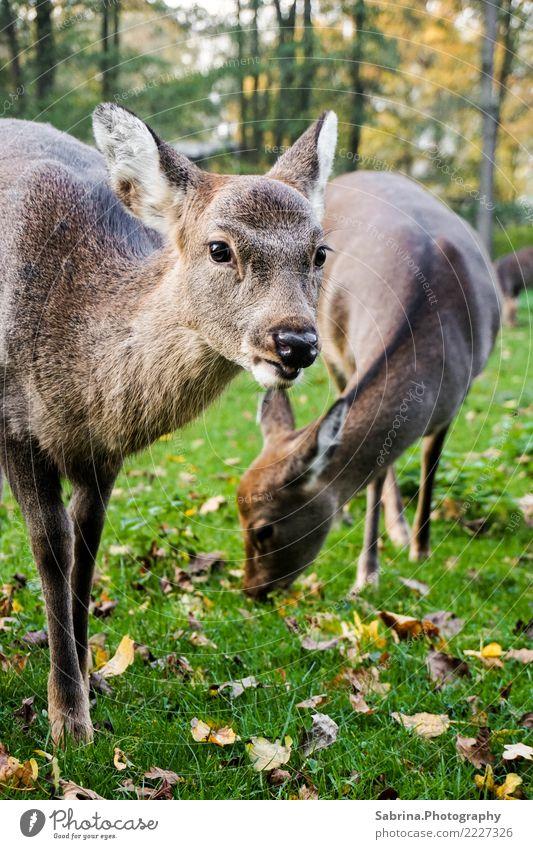 Bambi & Family Natur Herbst Schönes Wetter Baum Wald Tier Wildtier Tiergesicht Fell Zoo 2 Tiergruppe Tierfamilie Holz Essen Blick Coolness authentisch