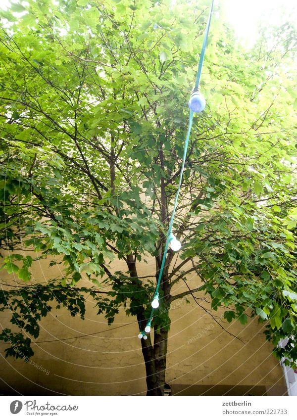 Damals, im Sommer Natur Baum Blatt Umwelt Ast Baumkrone Zweig Anschnitt Bildausschnitt Oktober Grünpflanze Lichterkette