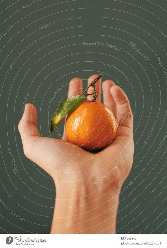 südfrucht Gesunde Ernährung Hand Blatt Lebensmittel orange Frucht Orange festhalten lecker Bioprodukte Vitamin gepflückt