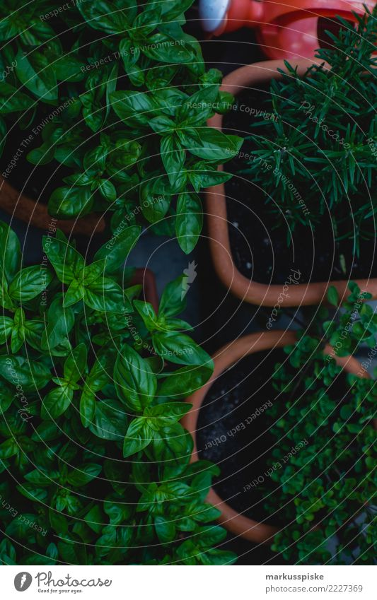 Gartenkräuter Basilikum Thymian Rosmarin Lebensmittel Kräuter & Gewürze Basilikumblatt Ernährung Essen Bioprodukte Vegetarische Ernährung Diät Fasten Slowfood