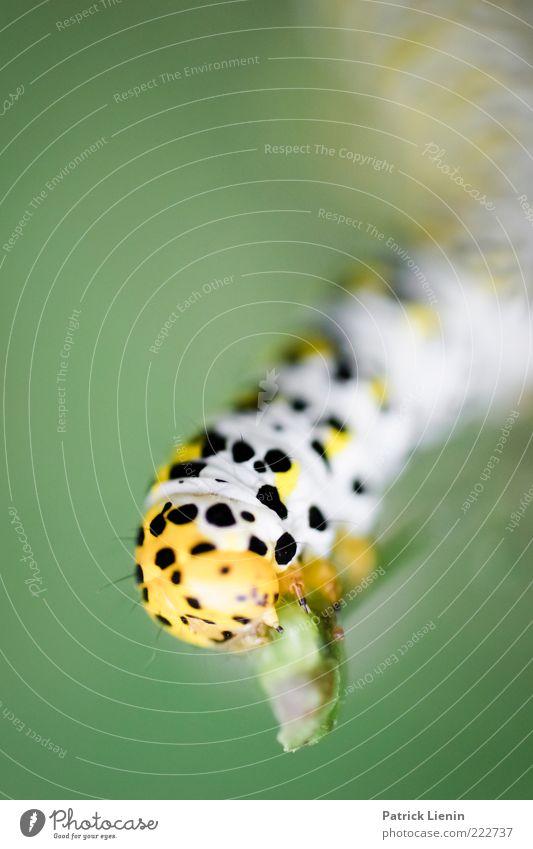 Nimmersatt Natur grün schön Pflanze schwarz Tier gelb Stimmung Umwelt klein Wandel & Veränderung Punkt außergewöhnlich Stengel Wildtier niedlich