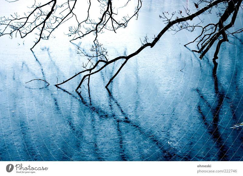 Frostig Wasser Winter Eis Baum Ast Teich gruselig Trauer Angst unheimlich Farbfoto Außenaufnahme Textfreiraum unten Reflexion & Spiegelung Wasserspiegelung