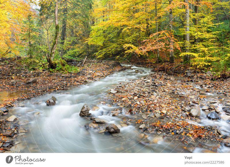 Fluss im Herbst Wald Natur Ferien & Urlaub & Reisen Pflanze blau Farbe schön grün Wasser weiß Landschaft Baum rot Blatt schwarz gelb