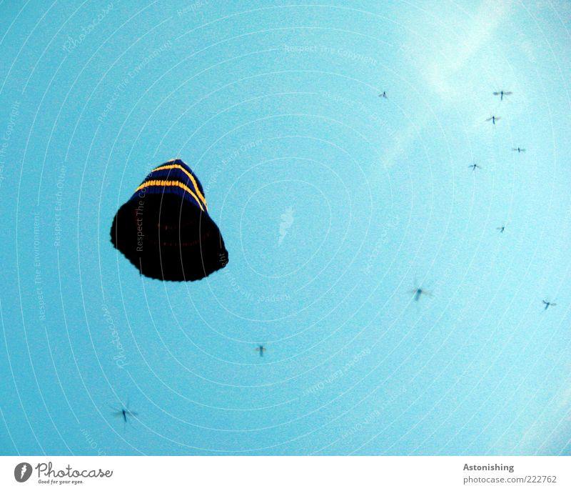 unter der Haube Luft Himmel Wolkenloser Himmel Sommer Wetter Schönes Wetter Mütze Tier Stechmücke Insekt Tiergruppe Schwarm fliegen weich blau gelb violett