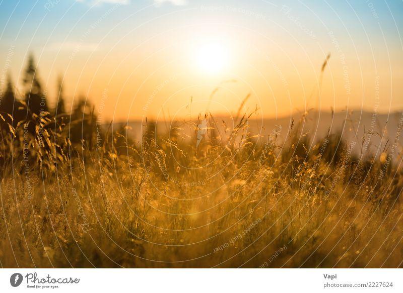 Gras auf einem Feld bei Sonnenuntergang Himmel Natur Ferien & Urlaub & Reisen Himmel (Jenseits) Pflanze blau Sommer Farbe schön weiß Landschaft Baum rot Wolken