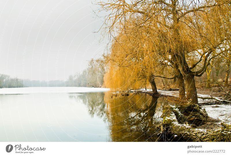 da ruht der See Umwelt Natur Landschaft Wasser Himmel Winter Eis Frost Schnee Pflanze Baum Wald Seeufer Einsamkeit stagnierend ruhig kalt Ferne Klarheit Weide