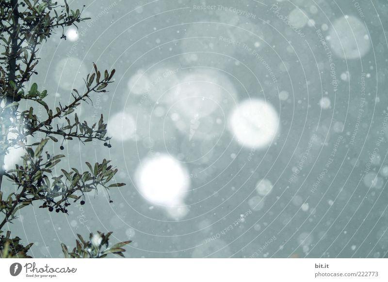 Silbermond Himmel blau Winter kalt Schnee Schneefall Klima fallen Kitsch Ast leuchten Mond Zweig Geäst Schneeflocke Winterstimmung