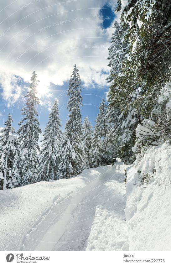 Rudi komm raus Natur weiß Baum grün blau Sonne Winter Schnee Wege & Pfade Landschaft Luft Wetter Fußspur Fußweg Schneelandschaft Schönes Wetter