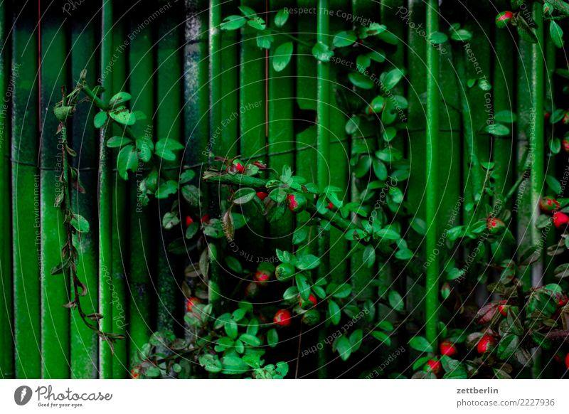Grünes Grün streichen bemalt mehrfarbig Farbe Farbstoff Garten Menschenleer Pflanze Tagger Textfreiraum Wachstum Hecke Ranke Blatt Zaun Nachbar Stadt Kulisse