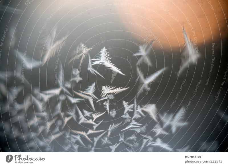 eisvogelschwarm Stil Umwelt Natur Winter Klima Eis Frost Fenster entdecken frieren glänzend eckig kalt Stimmung skurril Eisblumen Fensterscheibe