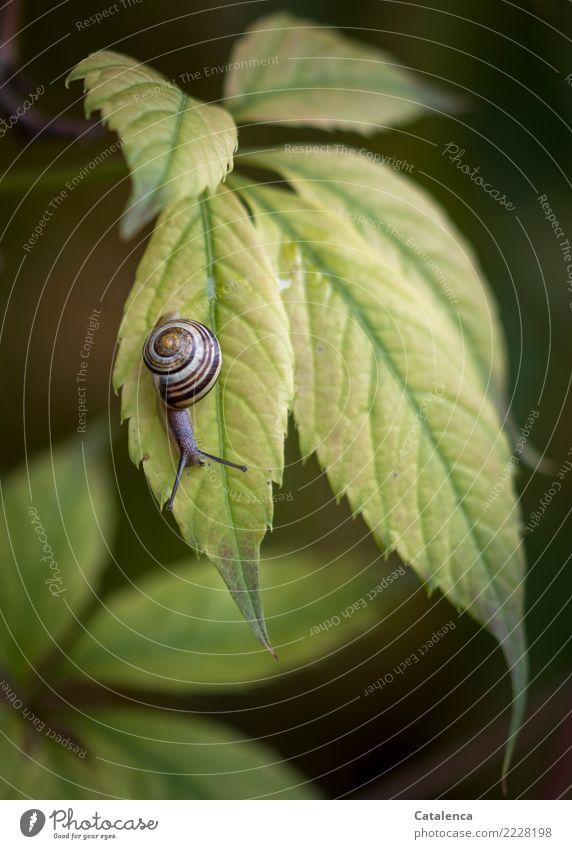 Wieder ein Schneckchen Natur Pflanze schön grün Landschaft Tier Blatt gelb Umwelt Herbst Garten braun Stimmung Design niedlich hängen