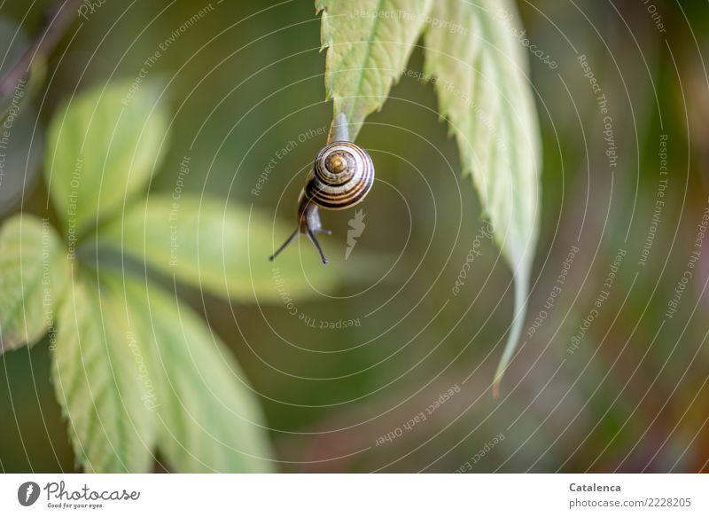 Riskant Natur Pflanze schön grün Tier Blatt gelb Herbst klein Garten braun Mut hängen anstrengen Schnecke Überleben