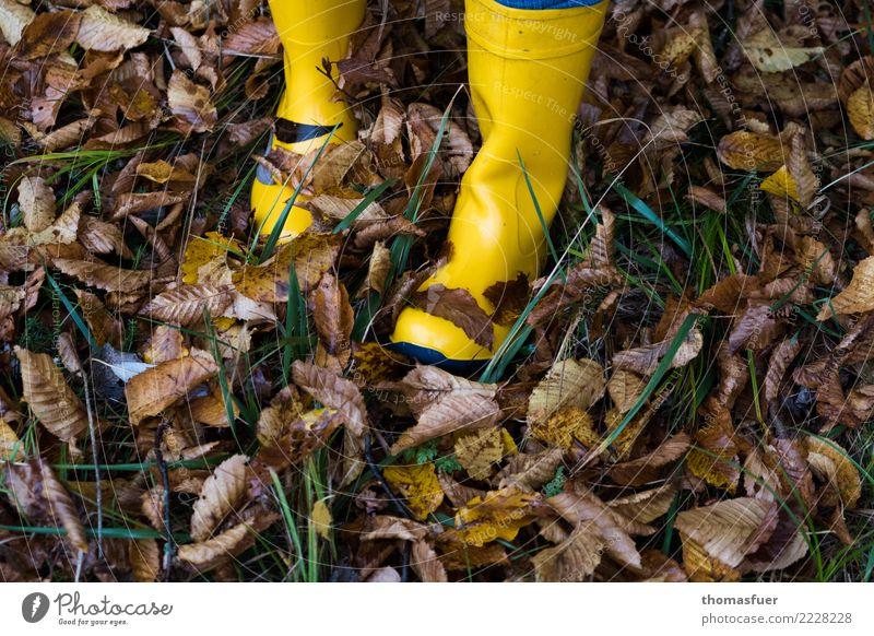Gummistiefel, Herbstlaub wandern Mensch Fuß 1 Natur schlechtes Wetter Regen Gras Blatt Garten Park Wiese Wald Bekleidung Arbeitsbekleidung Schuhe Stiefel gehen