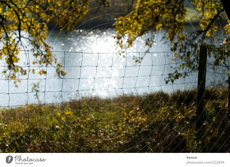 Am See Natur Wasser Baum Pflanze Blatt Wiese Herbst Gras Landschaft hell Umwelt glänzend Wachstum Ast Zaun