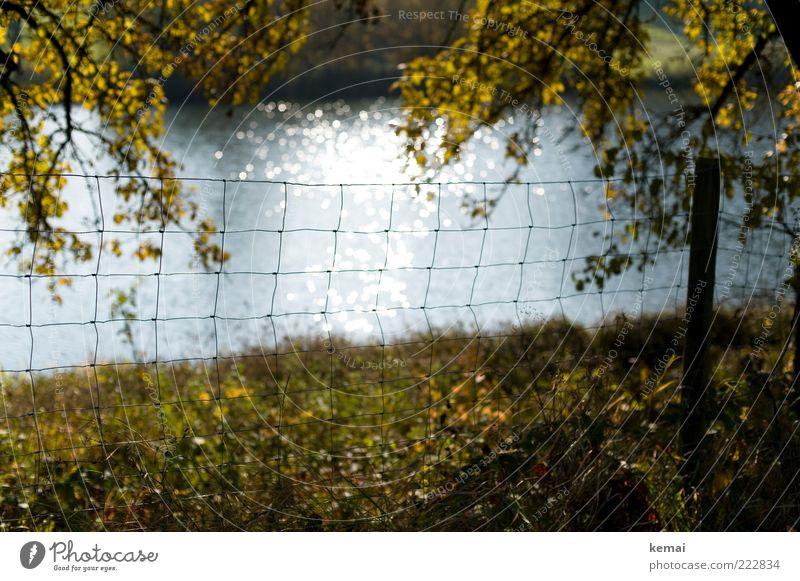 Am See Umwelt Natur Landschaft Pflanze Wasser Sonnenlicht Herbst Schönes Wetter Baum Gras Blatt Zweig Ast Wiese Seeufer Teich Zaun Zaunpfahl Maschendrahtzaun