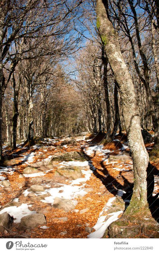 herbst & winter / licht & schatten Natur alt Himmel Baum blau Winter Ferien & Urlaub & Reisen ruhig Blatt Wald kalt Schnee Herbst Berge u. Gebirge Bewegung