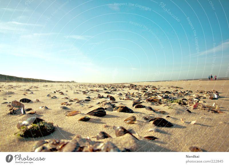 Muschelstrand Mensch Himmel Wasser Sommer Strand Meer Ferien & Urlaub & Reisen ruhig Leben Erholung Freiheit Glück Sand Landschaft Küste gehen