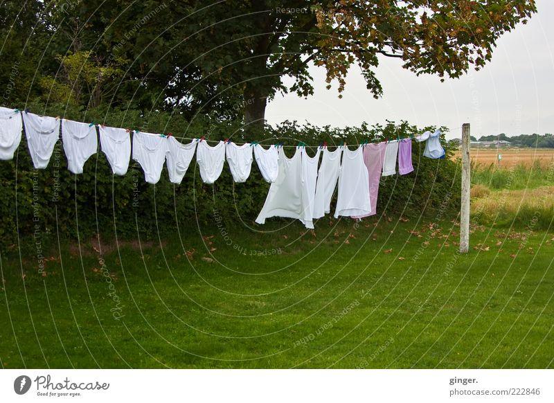 Wäsche XXL grün weiß Sommer Baum Gras Garten Wind groß Bekleidung Sträucher Sauberkeit trocknen hängen Wäscheleine Unterwäsche