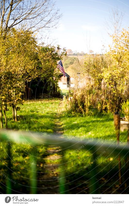 Flagge zeigen Pflanze Himmel Sonnenlicht Herbst Schönes Wetter Baum Gras Sträucher Garten Schrebergarten Fahne USA Amerika grün Patriotismus patriotisch