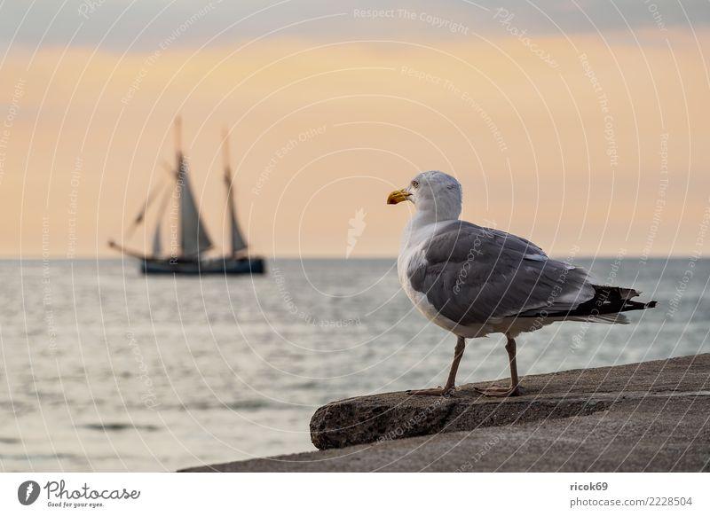 Segelschiff und Möwe auf der Hanse Sail in Rostock Ferien & Urlaub & Reisen Tourismus Segeln Wasser Küste Ostsee Schifffahrt maritim Romantik Idylle Natur