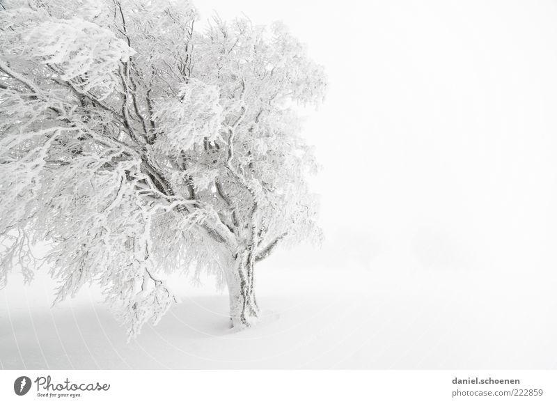 schneeweißer Textfreiraum rechts Baum Winter Ferien & Urlaub & Reisen Schnee Eis hell Nebel Wind Wetter Frost Klima Aktion Monochrom Schwarzwald Buche