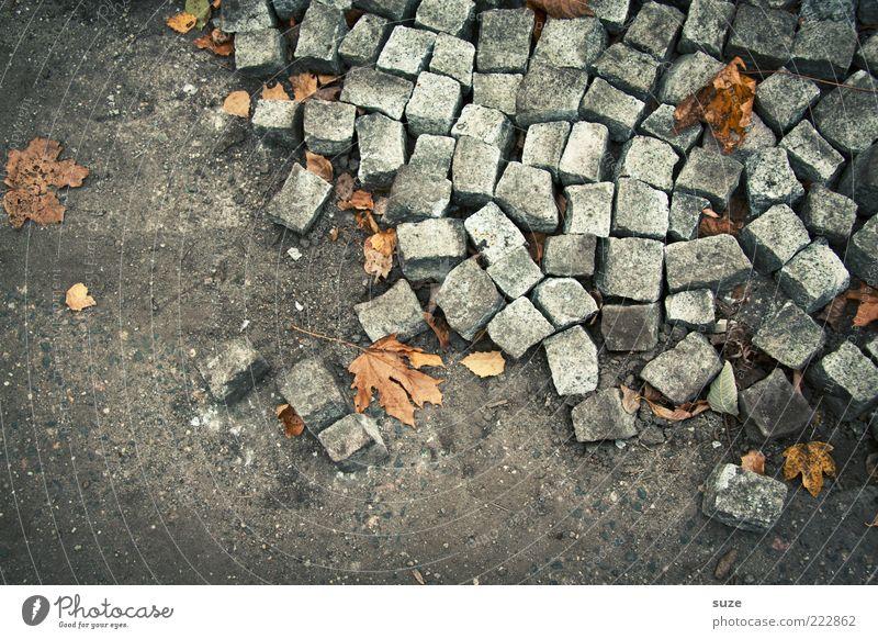 The Stones Umwelt Herbst Wege & Pfade grau Stein liegen Erde Ordnung Bodenbelag kaputt viele Baustelle Kopfsteinpflaster chaotisch Herbstlaub