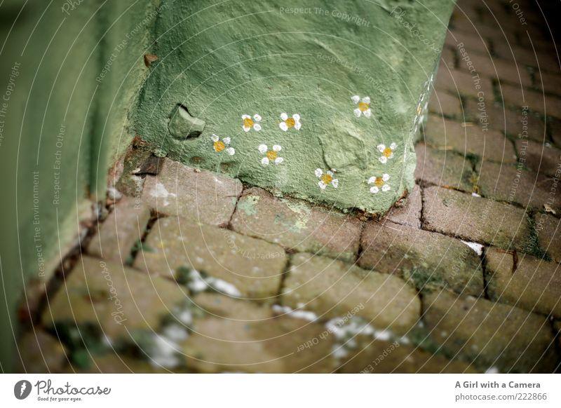 almost like spring grün Blume Winter gelb Schnee Wand Stein Mauer Graffiti Kunst verrückt Fröhlichkeit Ecke Bodenbelag einzigartig Idylle