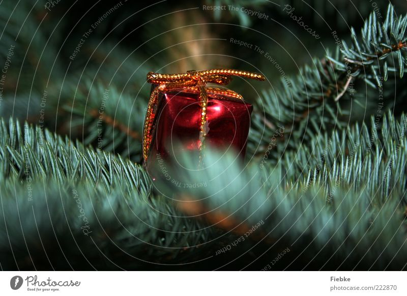 Geschenkezeit Weihnachten & Advent grün rot Winter klein glänzend Dekoration & Verzierung Weihnachtsbaum Wunsch geheimnisvoll Neugier Tanne Schleife Vorfreude