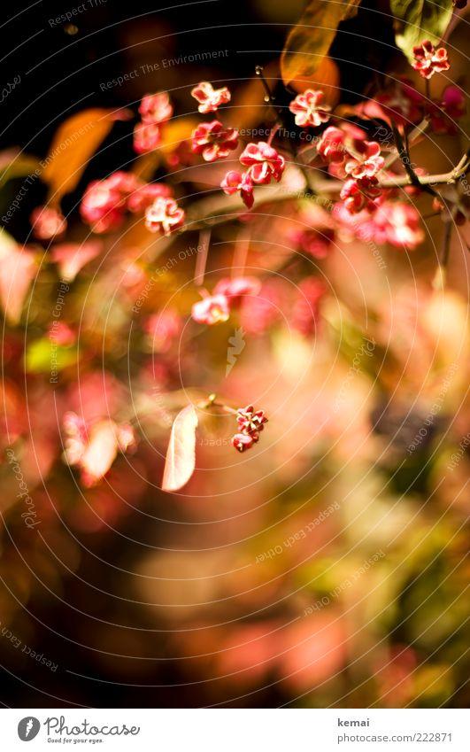 Kleine Blüten Natur rot Pflanze Blume Blatt Herbst Blüte Umwelt rosa Wachstum Sträucher Blühend Duft Schönes Wetter Wildpflanze Warme Farbe