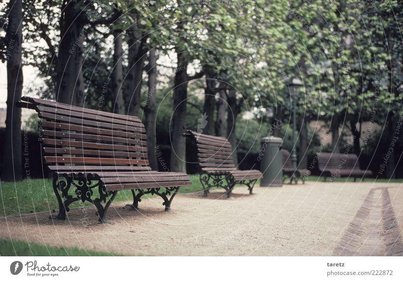 Keine Zeit für Pausen Baum Brüssel alt elegant kalt Einsamkeit Bank Parkbank klassisch verziert leer einladend Holzbank geschwungen Sauberkeit gepflegt Farbfoto