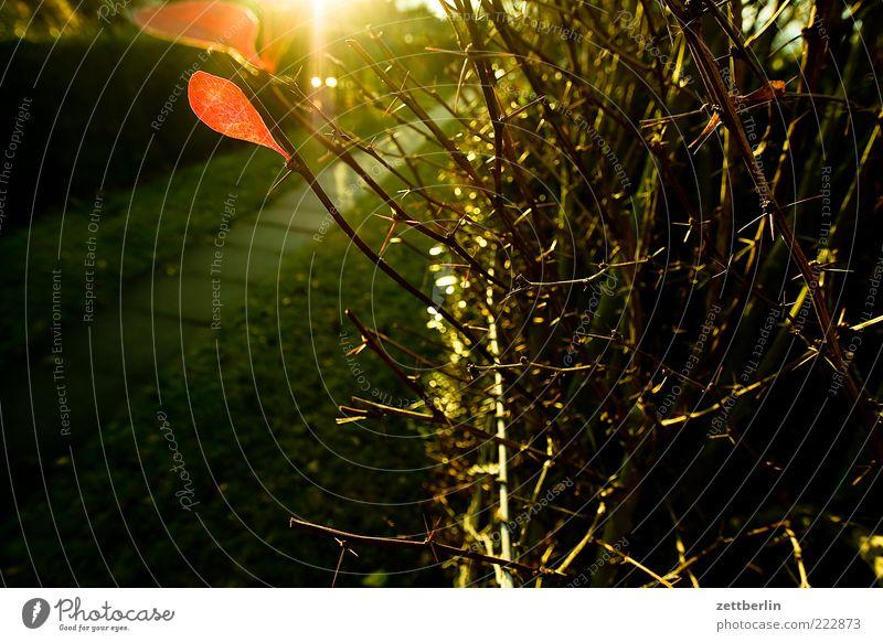 Brandenburgweg Umwelt Natur Erde Klima Wetter Sträucher Wege & Pfade ruhig Herbstwetter November Oktober wallroth Hecke Kleingartenkolonie Blatt Ast Zweig